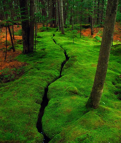Moss Creek, Desert Island, Maine.