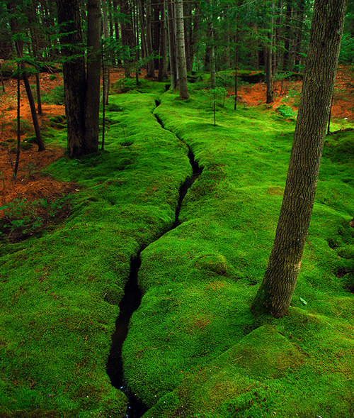 Moss Creek, Desert Island, Maine.