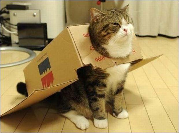 cardboard-plane-cat