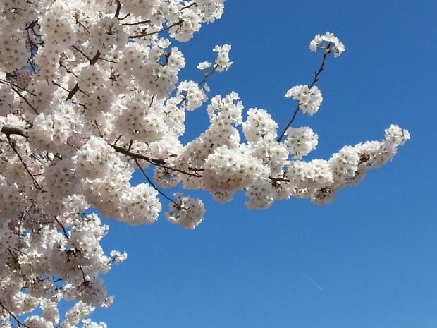 Random blossomage.