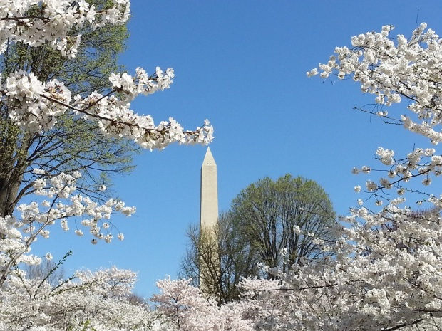 The Washington Monument, viewed from the Tidal Basin.
