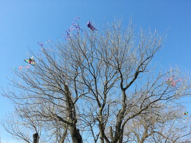 The kite-stealing tree.